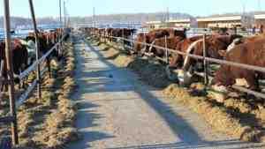 Турция проинспектирует мясное производство в России