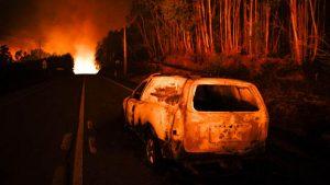 41 человек погиб из-за лесных пожаров в Португалии