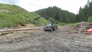 Рада спохватилась: Лес и янтарь Украины валом утекают за рубеж