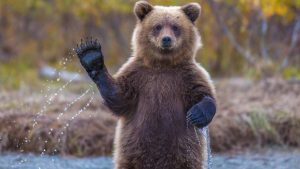 В ФСБ предложили считать медведей стратегическими ресурсами