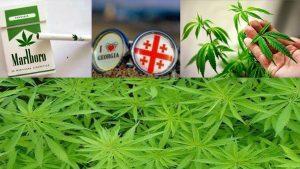 Грузия планирует заработать 380 млн долларов на экспорте марихуаны