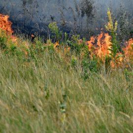 Масштабный пожар в прифронтовой зоне Донбасса привёл к детонации снарядов