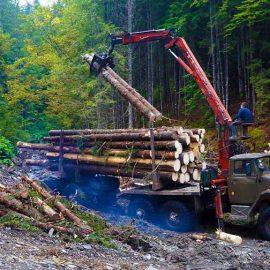 Чем дальше в лес, тем Зеленее