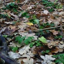 На Донбассе уничтожен снайпер украинских ССО