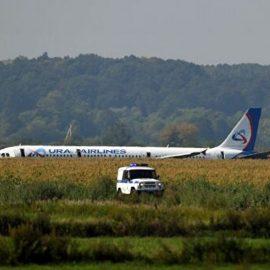Чудо в Жуковском. Самолёт совершил экстренную посадку на кукурузное поле
