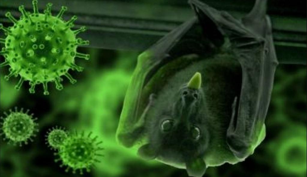 летучие мыши и коронавирусы